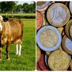 Boer zoekt geld: als de boerderij failliet dreigt te gaan