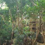 Center Parcs het Heijderbos: subtropen dichtbij huis