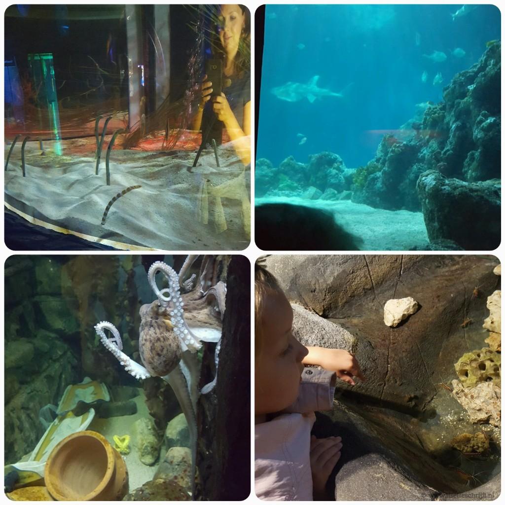finding dory in Sea Life oberhausen Lisette Schrijft