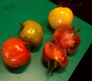 tomaten proeven bij tomatoworld Lisette Schrijft