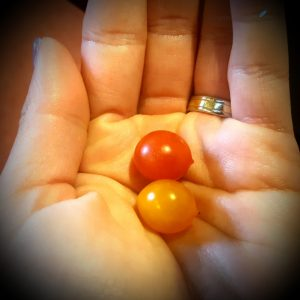 tomberry tomatoworld Lisette Schrijft