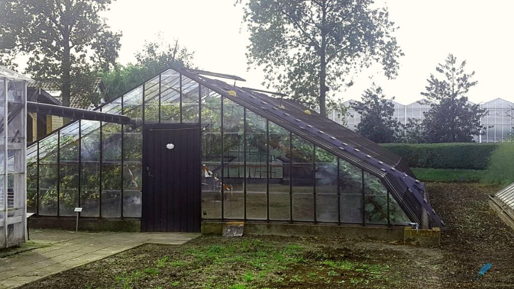 Een westlandse druivenserre Westlands museum Lisette Schrijft