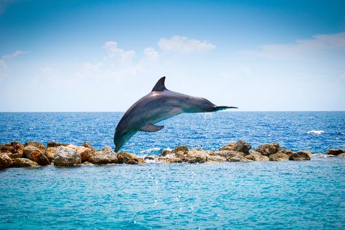 met dolfijnen zwemmen op curacao Lisette Schrijft