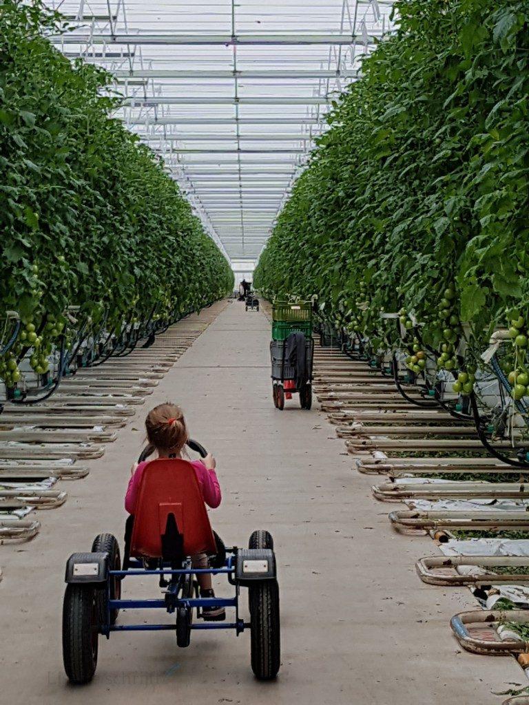 tuinbouw tuin tuindersvrouw tomaten Lisette Schrijft