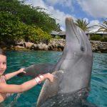 Zwemmen met dolfijnen: op de bucketlist of niet?