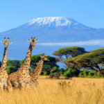 Op safari naar Kenia: hoog op onze verlanglijst!