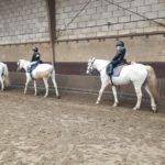 Paardrijles: help, mijn kind heeft een hobby…