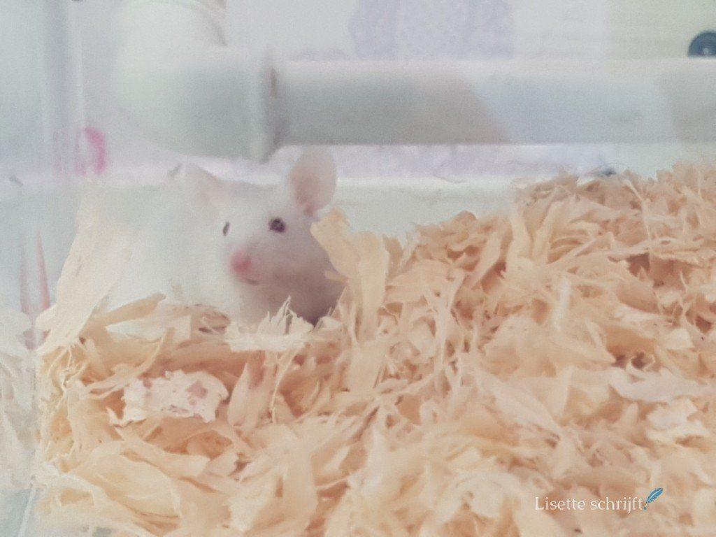 onze muis jerry is nogal dik geworden