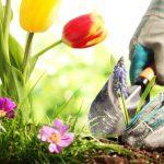 tips om de tuin zomerklaar te maken